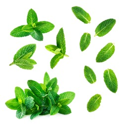 Fresh mint leaves collection  isolated on white background, top view. Close up of peppermint