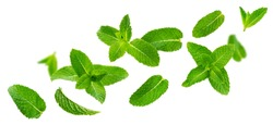 Fresh mint leaves, falling peppermint foliage isolated on white background with clipping path. Green spearmint, flying herbal tea ingredient, collection
