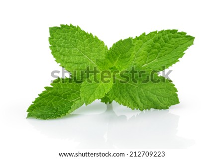 fresh mint leaves , isolated on white background #212709223