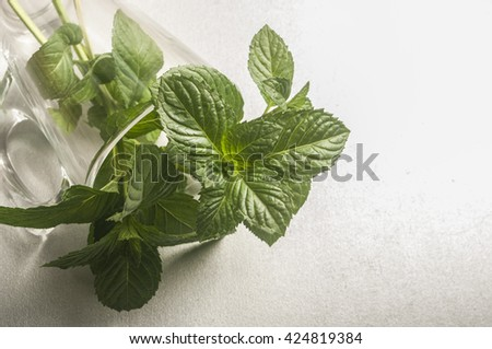 fresh mint leaves on a white background #424819384