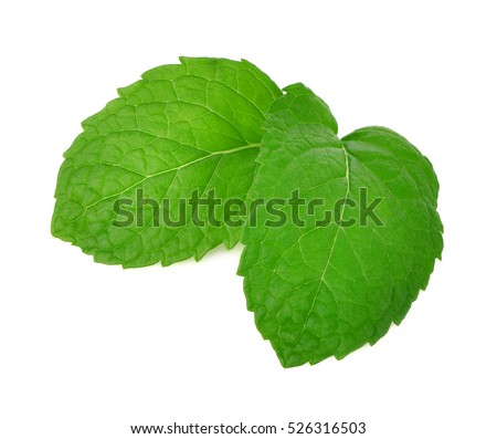 fresh mint leaves on a white background #526316503