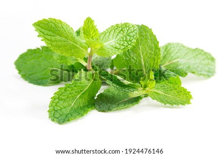 Fresh mint leaves, Peppermint Isolated on white background. Foto stock ©