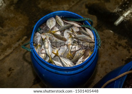 Fresh morning catch at the fish market. Fish and seafood of all varieties lies in a heap before it is sorted by type and sent for sale. Phuket fisherman port market, Thailand