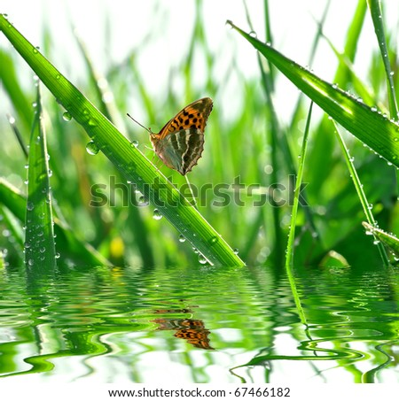 fresh morning dew and butterfly #67466182
