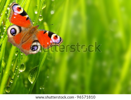 Fresh morning dew on a spring grass and butterfly, natural background - close up with shallow DOF.