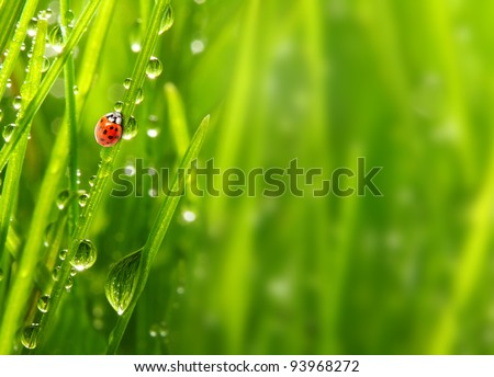 Fresh morning dew on a spring grass and little ladybug, natural background - close up with shallow DOF.