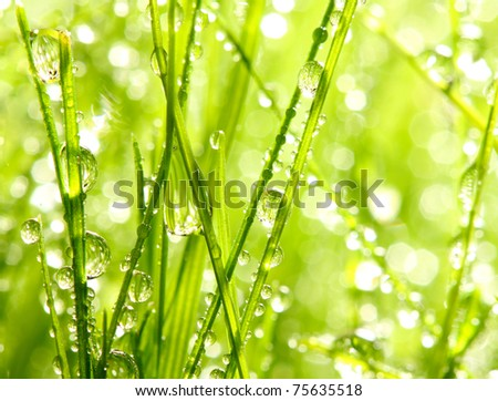 Fresh morning dew on spring grass, natural background - close up with shallow DOF.