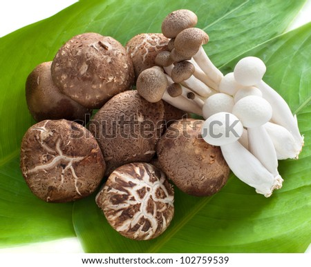 fresh mushroom on green leaf
