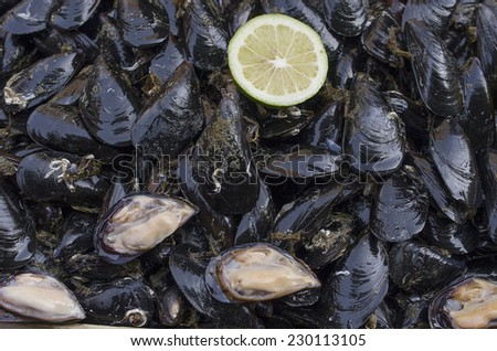 Fresh mussels at the main fish market (a street, open air market) in Catania, Sicily, Italy.