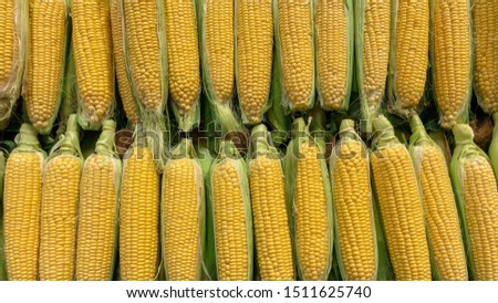 fresh, natural and healthy milk corn