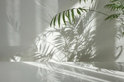 Fresh natural branches of evergreen tropical palm plant with decorative shadows on a light wall and glossy table surface. Game of shadows on a wall from window at the sunny day.