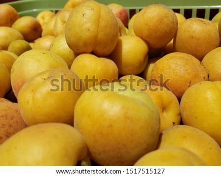 Fresh Natural Organic Apricot Harvest