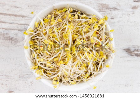 Fresh nutritious broccoli sprouts as source natural vitamins and minerals. Healthy nutrition