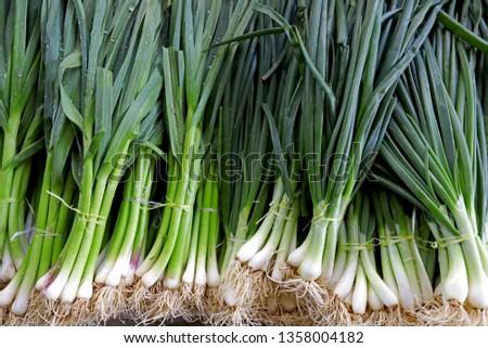 Fresh onion and fresh garlic #1358004182