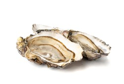 Fresh opened oyster half isolated on white background. Raw french oysters mollusc, shellfish or mussel closeup