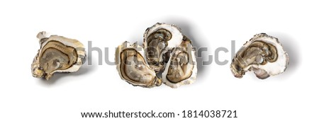 Fresh opened oyster half isolated on white background. Raw french oysters mollusc, shellfish or mussels collection top view Stockfoto ©