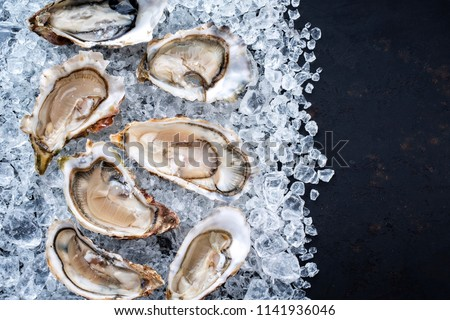 Fresh opened oyster offered as top view on crushed ice with copy space right