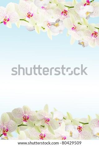 Fresh orchid border