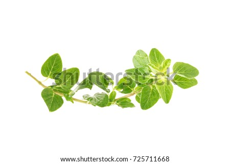 Fresh Oregano herb on a white background. #725711668