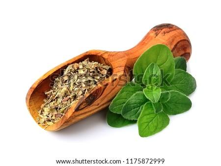 Fresh oregano herbs .Dried spice of oregano herbs. #1175872999
