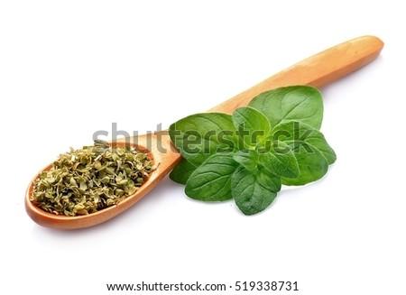 Fresh oregano herbs .Dried spice of oregano herbs. #519338731