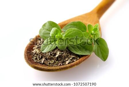 Fresh oregano herbs .Dried spice of oregano herbs.  Oregano or marjoram leaves isolated on white background cutout  #1072507190