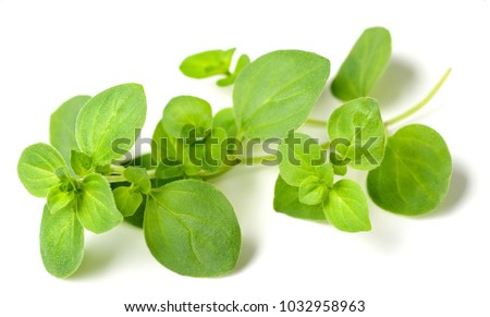fresh oregano isolated on white #1032958963