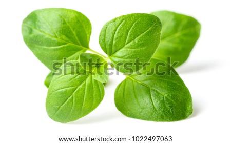 fresh oregano leaves isolated on white #1022497063