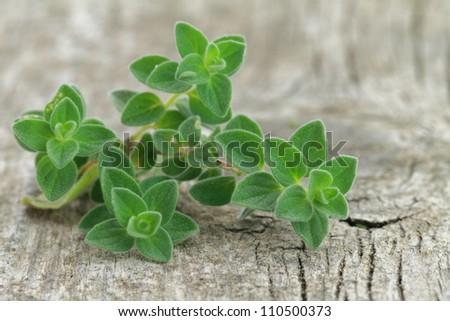 Fresh oregano on wooden background