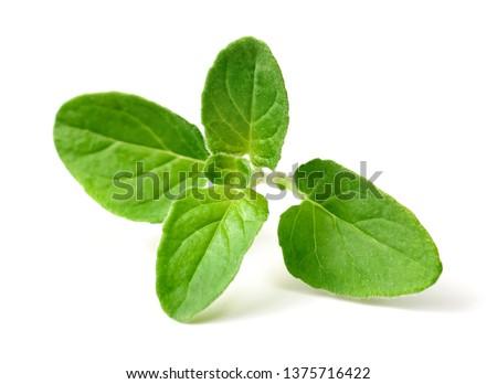 fresh oregano twig isolated on white background Stock photo ©