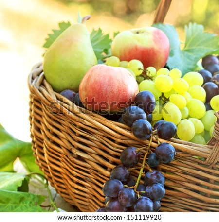 Fresh organic autumn fruits