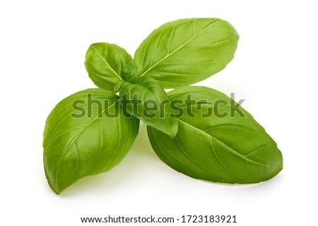Fresh organic basil leaves, isolated on white background. Foto stock ©
