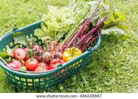 Fresh organic carrots, beet, potatoes, cucumbers, tomatoes, sweet peppersand apples in a green plastic basket. #486638887