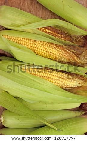 Fresh organic corn on cob