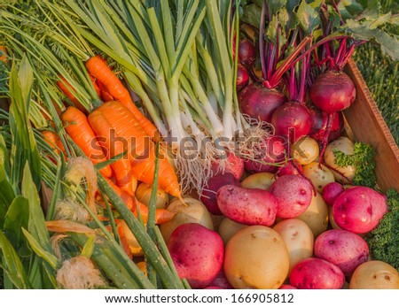 Fresh Organic Garden Vegetables