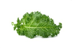 Fresh organic green kale vegetable isolated on white background