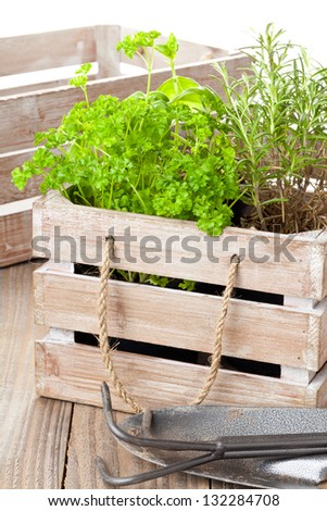 Fresh organic potted herbs in wooden crate on table with gardening tools