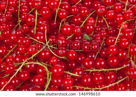 Fresh organic Red currants  isolated on white background #146998610