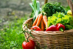 Fresh organic vegetables basket , local food , freshly harvested from garden