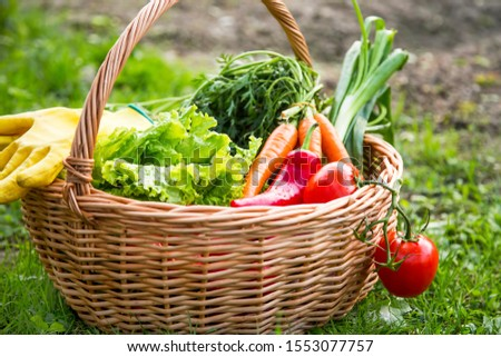Fresh organic vegetables basket , local food , freshly harvested from garden #1553077757