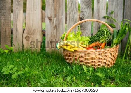 Fresh organic vegetables basket , local food , freshly harvested from garden #1567300528