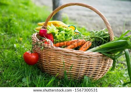 Fresh organic vegetables basket , local food , freshly harvested from garden #1567300531
