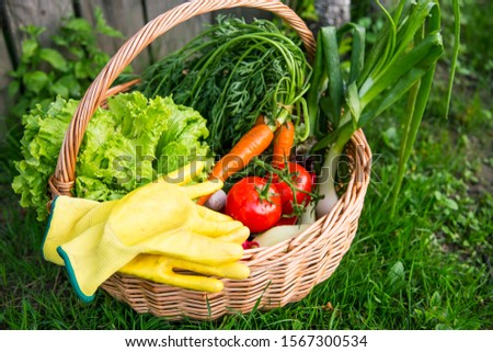 Fresh organic vegetables basket , local food , freshly harvested from garden #1567300534