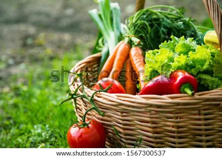 Fresh organic vegetables basket , local food , freshly harvested from garden #1567300537