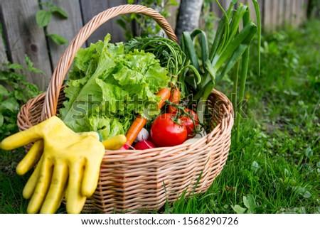 Fresh organic vegetables basket , local food , freshly harvested from garden #1568290726