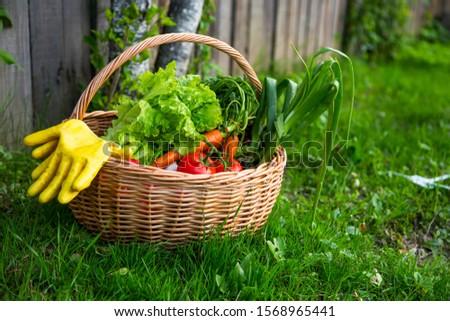 Fresh organic vegetables basket , local food , freshly harvested from garden #1568965441