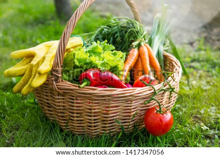 Fresh organic vegetables in a basket with gardening gloves outdoor in the garden, freshly harvesting organic vegetables in the basket, healthy organic gardening  #1417347056
