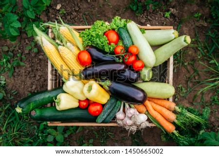 Fresh organic vegetables in a wooden box on the background of a vegetable garden. Concept of biological, bio products, bio ecology, grown by yourself, vegetarians. Top view #1450665002