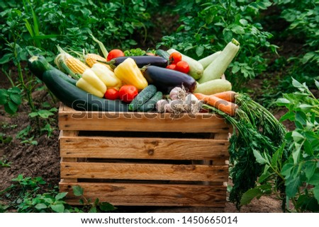 Fresh organic vegetables in a wooden box on the background of a vegetable garden .Concept of biological, bio products, bio ecology, grown by yourself, vegetarians #1450665014