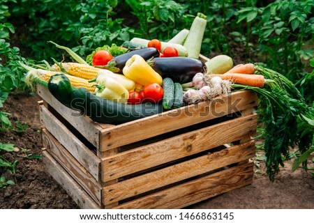 Fresh organic vegetables in a wooden box on the background of a vegetable garden .Concept of biological, bio products, bio ecology, grown by yourself, vegetarians #1466863145